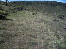 Prestine Vegetation at the Boarder of Kosipe and Sopu - Goilala (68)